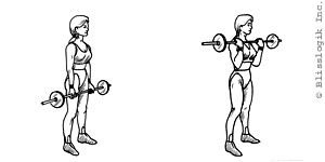 Bicep Barbell Exercises