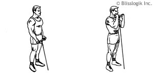 Bicep Exercises | By Weight-Training-Exercises.com