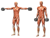 Shoulder Exercises For Weight Training